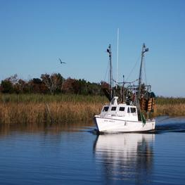 Gulf of Mexico Shrimp Boats