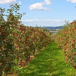 Red Jacket Orchards